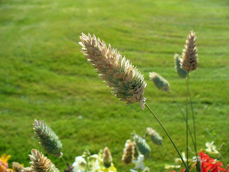 practica cuantificacion de acido urico como bajar acido urico rapido hierbas medicinales para curar el acido urico