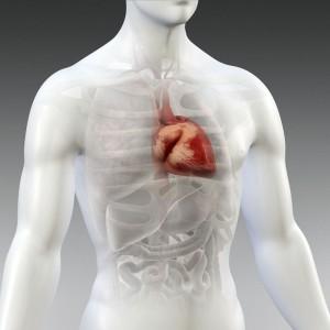 Heart's_Ubication