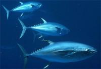Pescados azules para subir el HDL