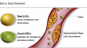 Berberina, un suplemento natural efectivo para bajar el colesterol