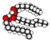 Estructura de los triglicéridos
