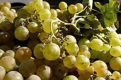Propiedades del aceite de uva