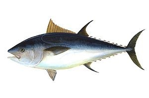 Pescados azules contra triglicéridos altos