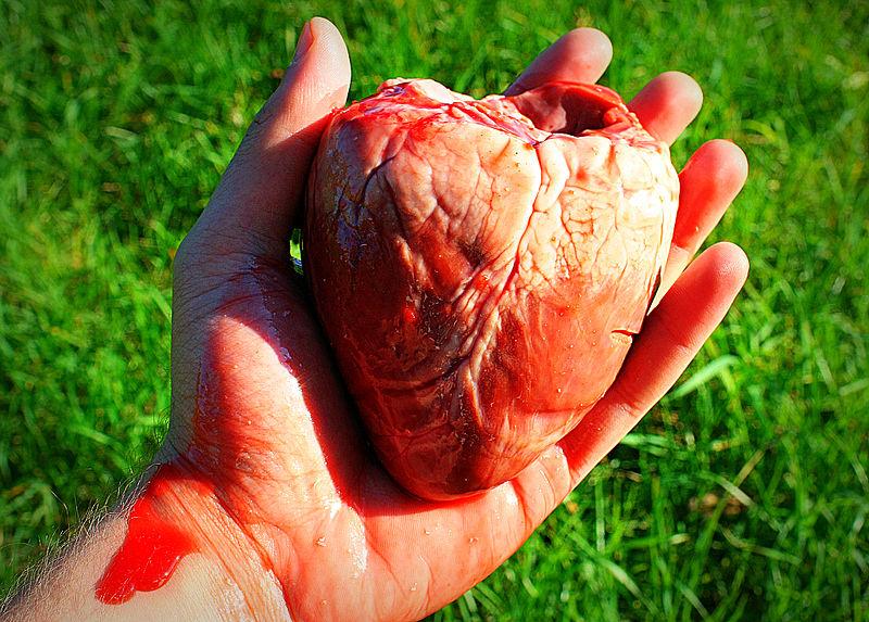 Información sobre el corazón: qué es y cuál es su función ...
